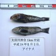 cesiumfish