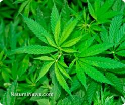 Prohibition is dead: 54 percent of Georgians want marijuana fully legalized