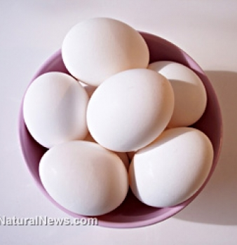 Searching for a good egg: Which type is best – Organic, free-range, pastured or cage-free?