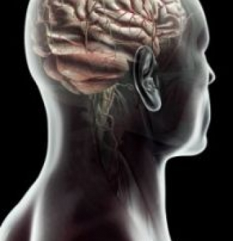 STUDY: Human Brain does not distinguish between threats to self and loved ones