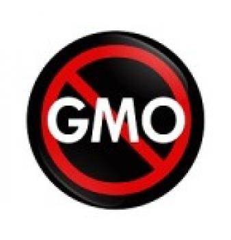 Report Indicates GMO Role in Gluten Ailments