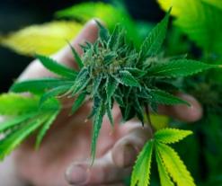 Alaska takes major step toward marijuana legalization