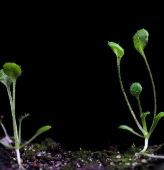 NASA to attempt to grow plants on the Moon