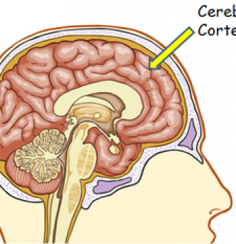 STUDY: Religious and Spiritual Belief tied to Thicker Cerebral Cortex