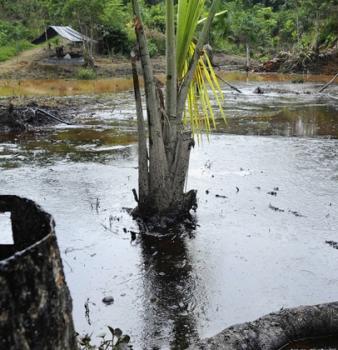 Chevron Defends Its RICO Victory in the Epic Ecuadorian Oil Pollution Case