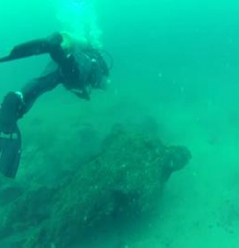 Ancient Underwater Forest: 50,000 Year-Old Swamp Discovered By Scuba Divers Off Alabama's Coast