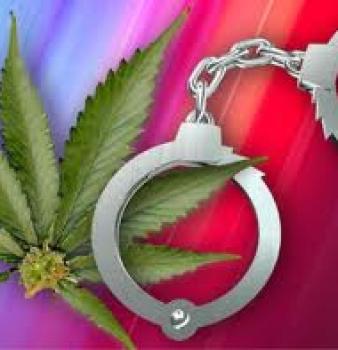 "Harris County DA warns, ""Marijuana is creating deadly situations!"""