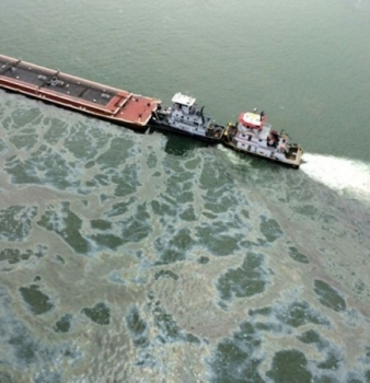 Galveston, Texas, oil spill threatens bird migration