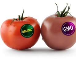 Federal Law Would Make GMO Labeling Voluntary, Preempt State Laws